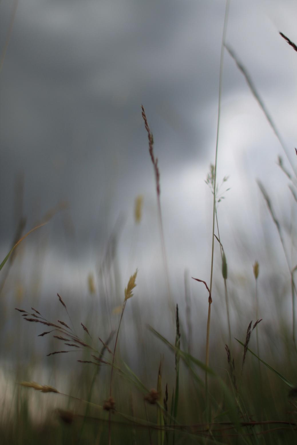Gras vor Sommergewitter