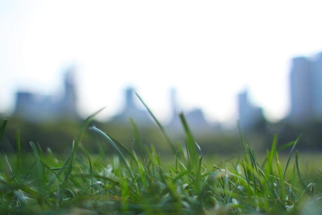 Froschperspektive Skyline Central Park, NY