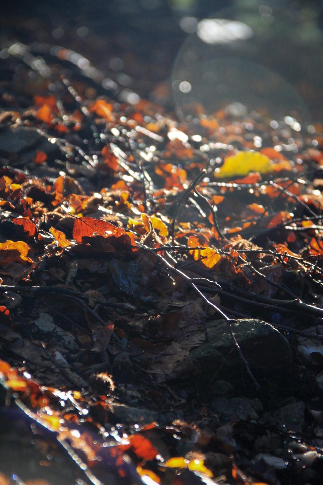 Herbstspaziergang Laub Boden