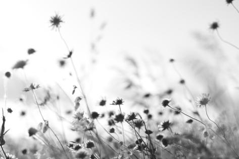 Kornblumen.jpg