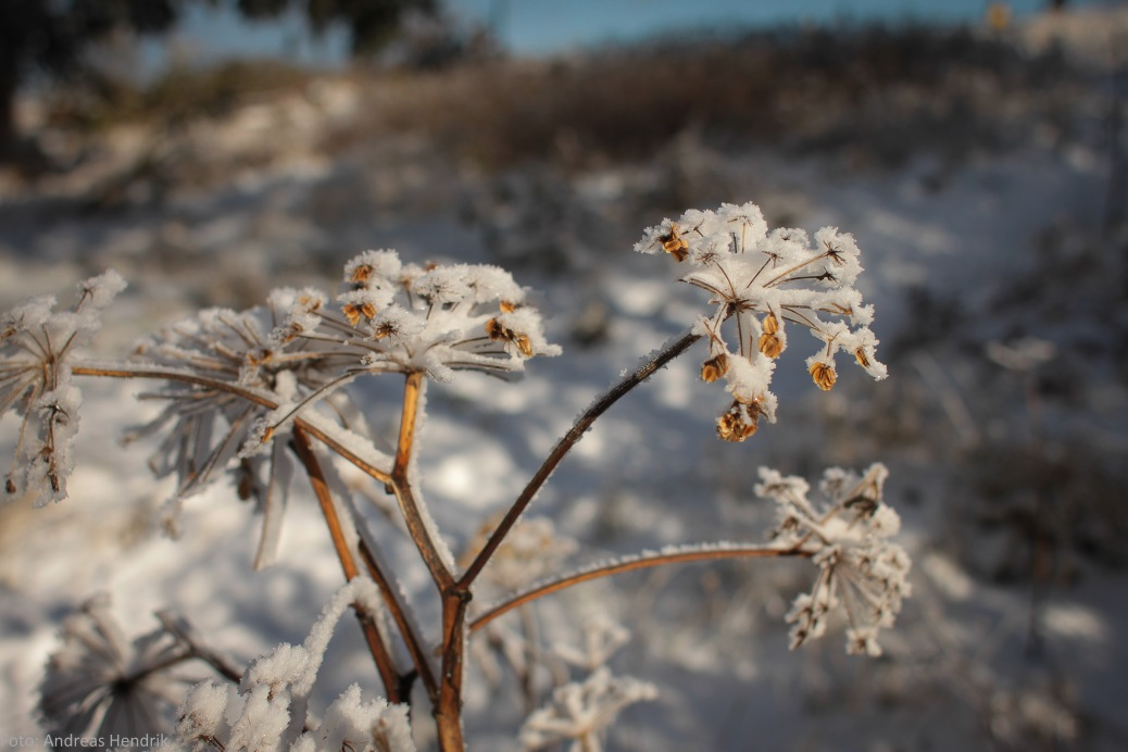 Ice cristal flowers 2
