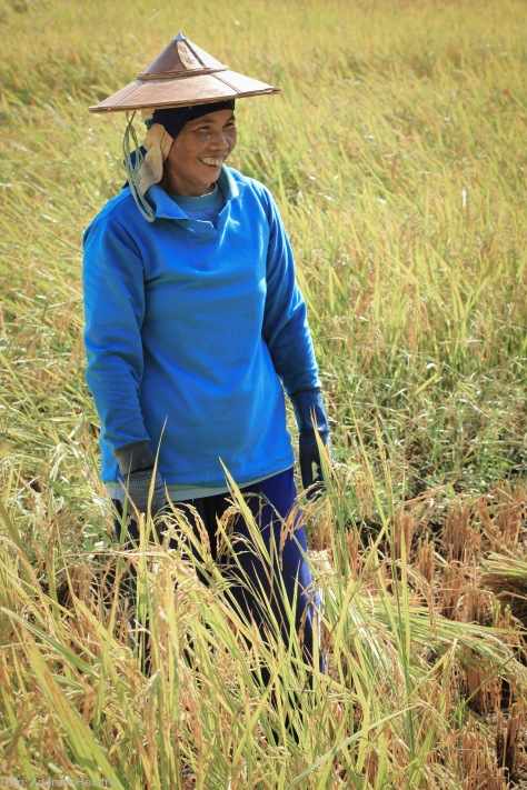 Rice agricultural worker2