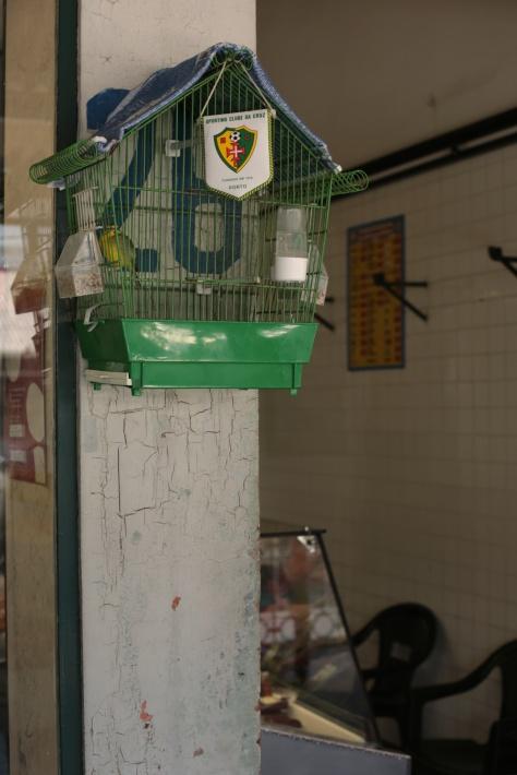 Vogel als Fussball-Fan
