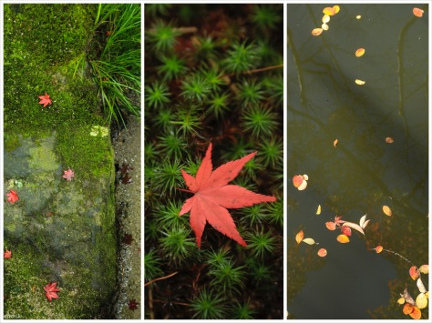 Big Red-21_Foto_3Collage_Maple-Leaf_Water