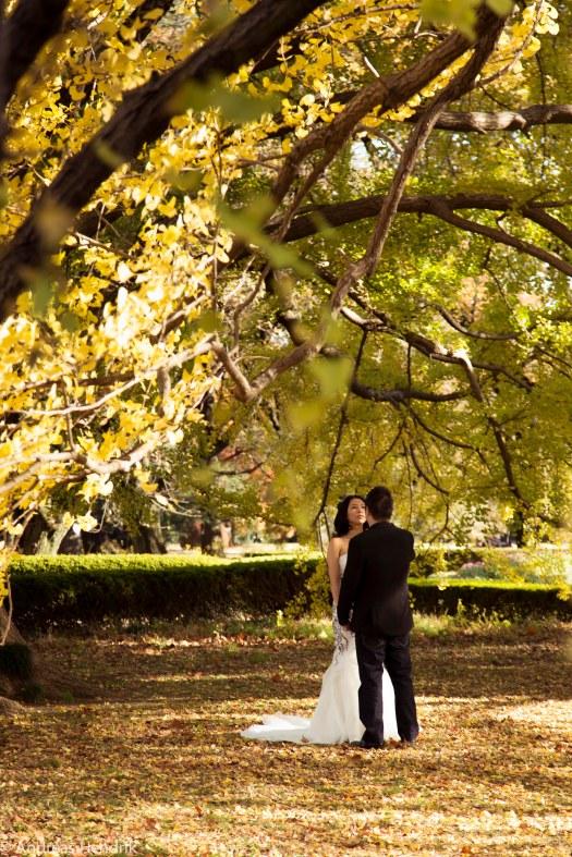 Paare im Park, Hochzeitspaar unter gelben Bäumen