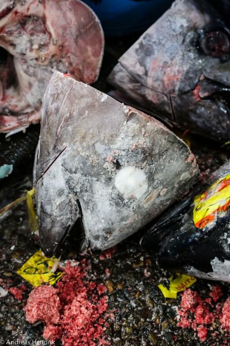 Thunfischkopf tiefgefroren