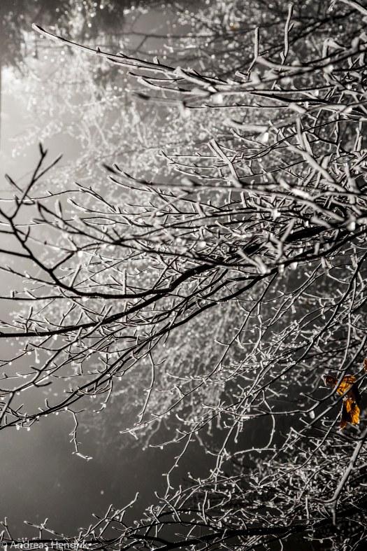 Eiskristalle am Busch