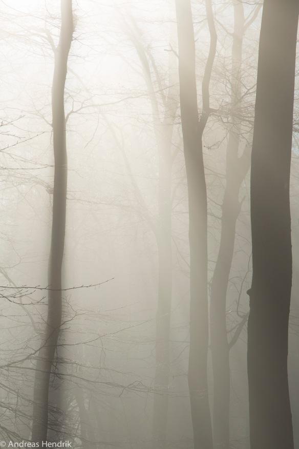 Nebel am Feldberg-2