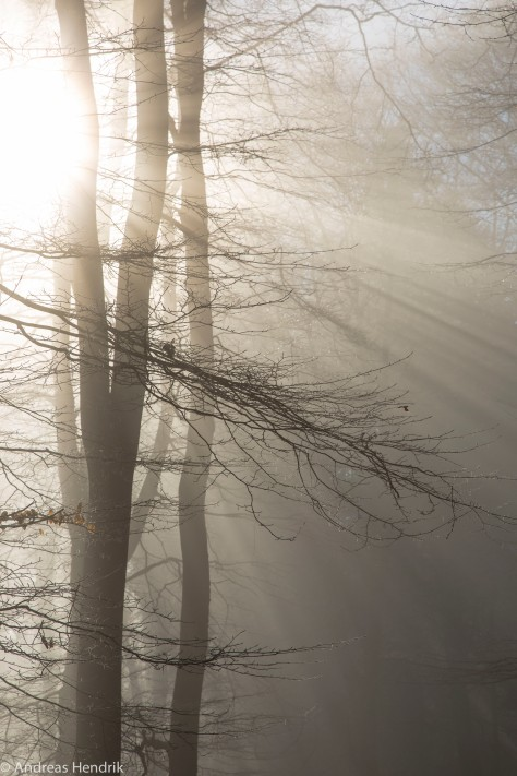 Nebel am Feldberg-3