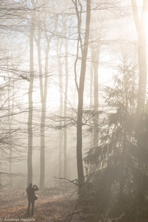 Nebel am Feldberg-4