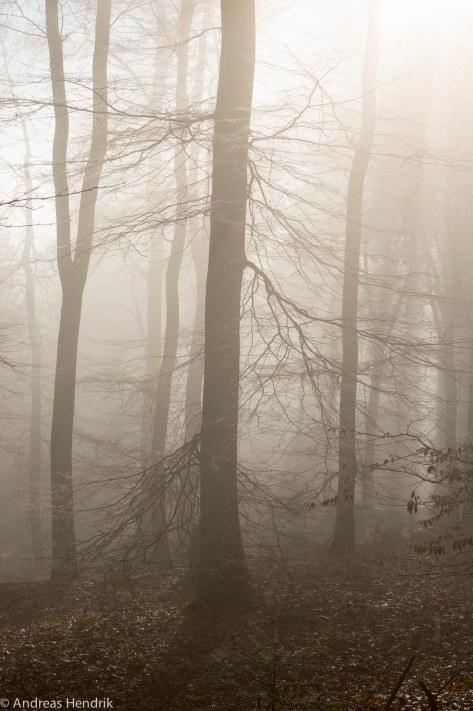 Nebel am Feldberg