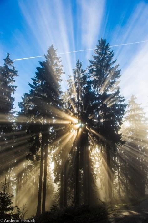 Sonnenstrahlen im Nebel am Feldberg