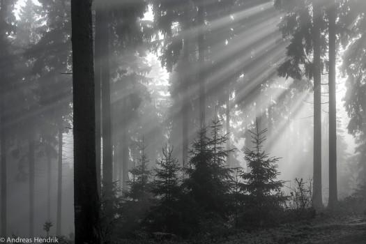 Sonnenstrahlen im Winter am Feldberg-2
