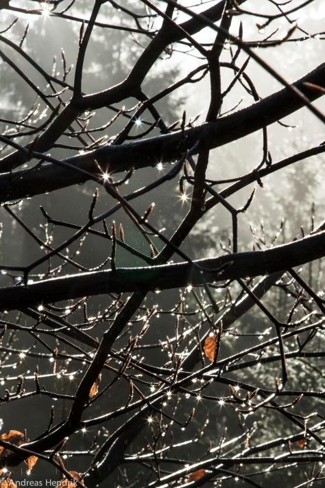 Wassertropfen glitzern wie Sterne im Busch
