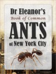 Dr Eleanor's Book of Common Ants of New York City