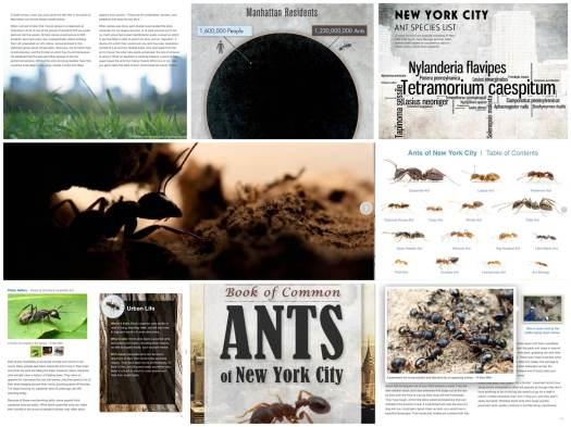Spannendes über Ameisen in NYC
