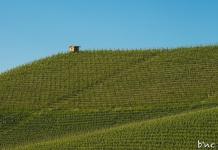 Piemont_Mohnblumen_Sonne_Kornfeld-4