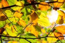 Herbst_Blätter_Feldberg_20141004-2