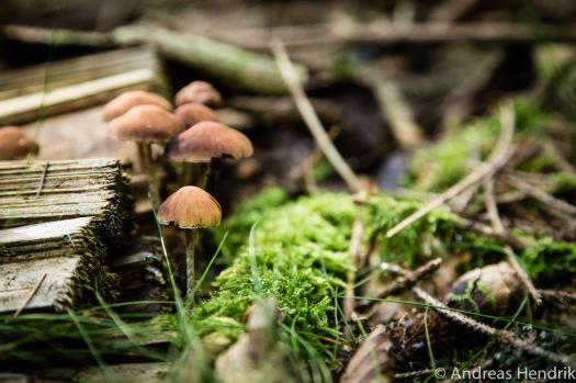 Herbst_Blätter_Feldberg_20141004-4