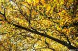 Herbst_Blätter_Feldberg_20141004-6