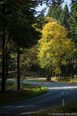 Herbst_Blätter_Feldberg_20141004-7