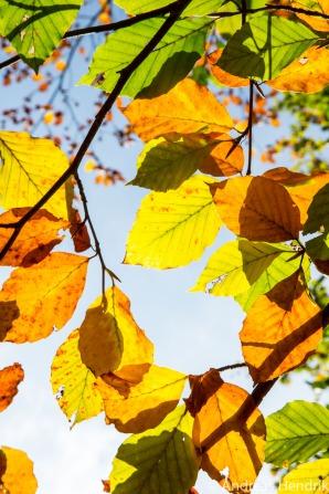 Herbst_Blätter_Feldberg_20141004-9