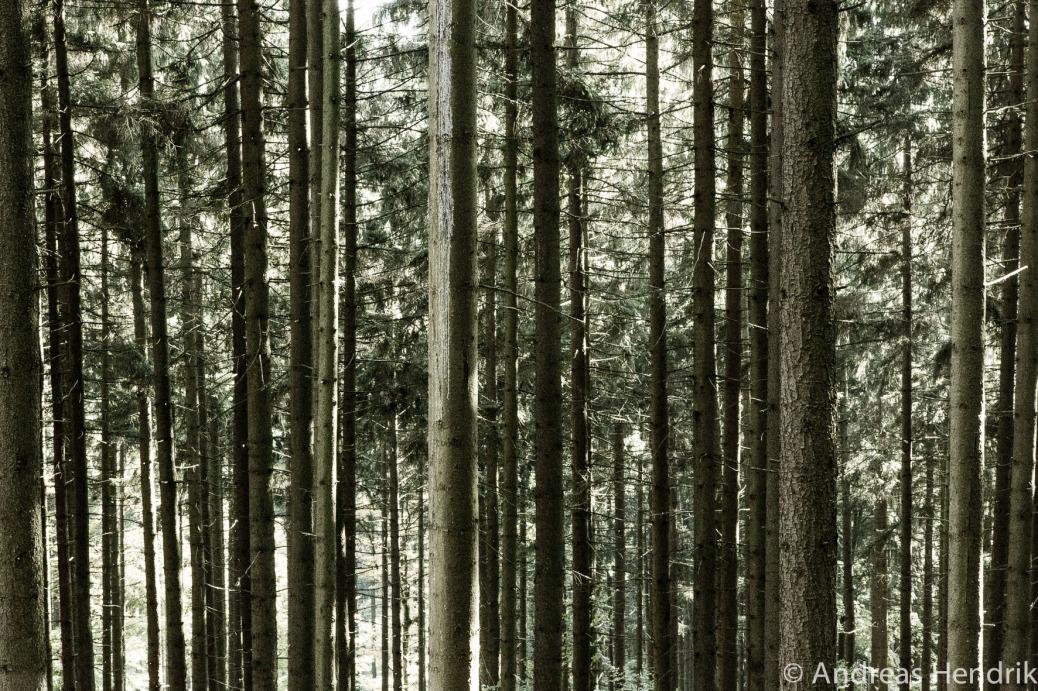 20141019 Wald Bäume