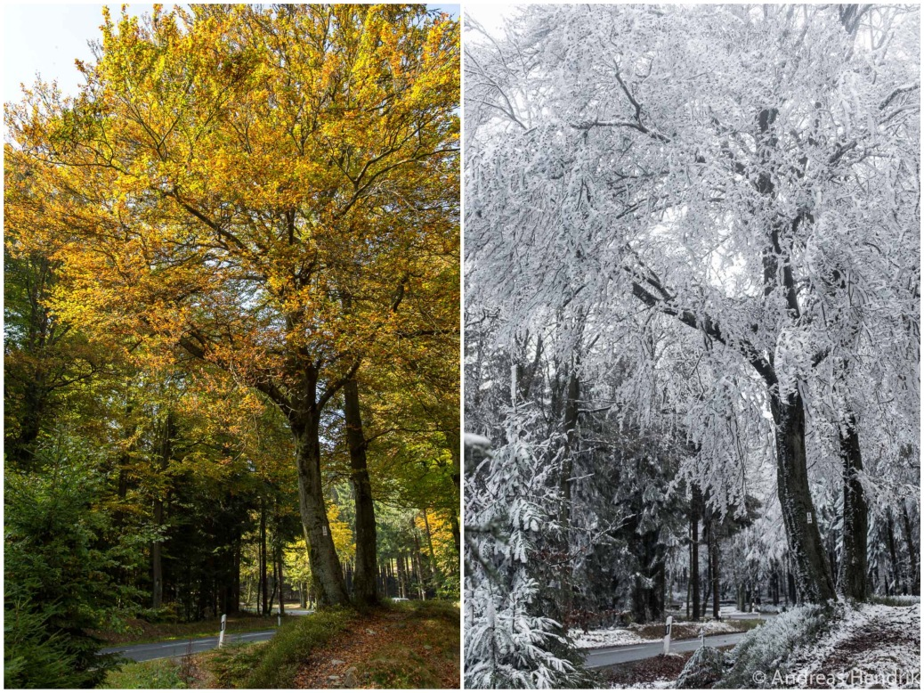 Feldberg-_Seasons_Herbst_Winter