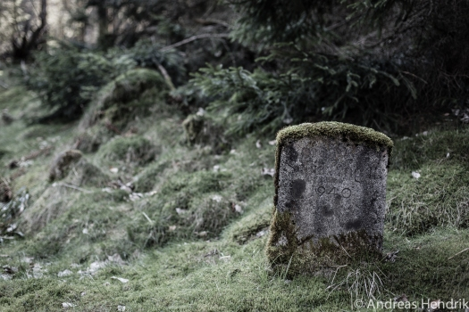 DL3B1934_Mystic Forest