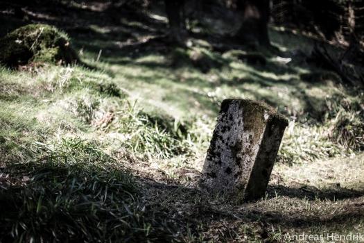DL3B1944_Mystic Forest