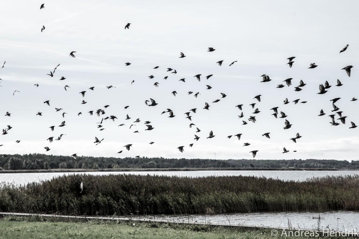 Die Vögel von Estland | Birds of Estonia | Haapsalu